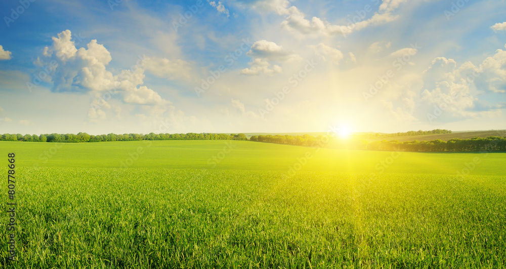 Fototapeta field, sunrise and blue sky