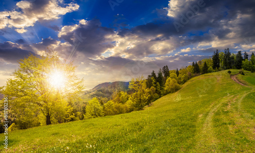 Canvas Prints Honey path to forest in mountains at sunset