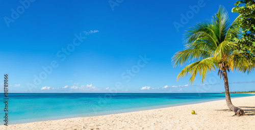 Foto op Canvas Palm boom Amazing sandy beach with coconut palm tree and blue sky, Caribbe