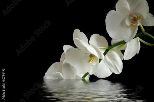refleksja kwiat orchidei
