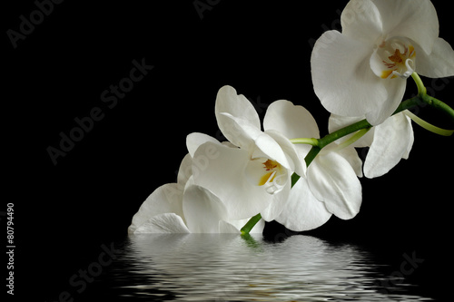 Keuken foto achterwand Orchidee orchid flower reflexion