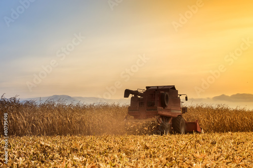 Fotografie, Obraz  Red harvester working on corn field
