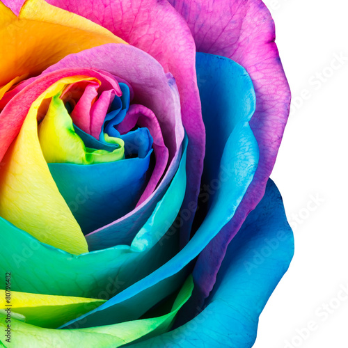 Foto op Canvas Madeliefjes Rainbow rose