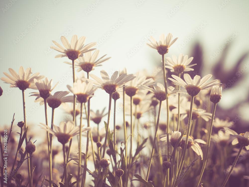 kwiaty z filtrem efekt retro styl vintage