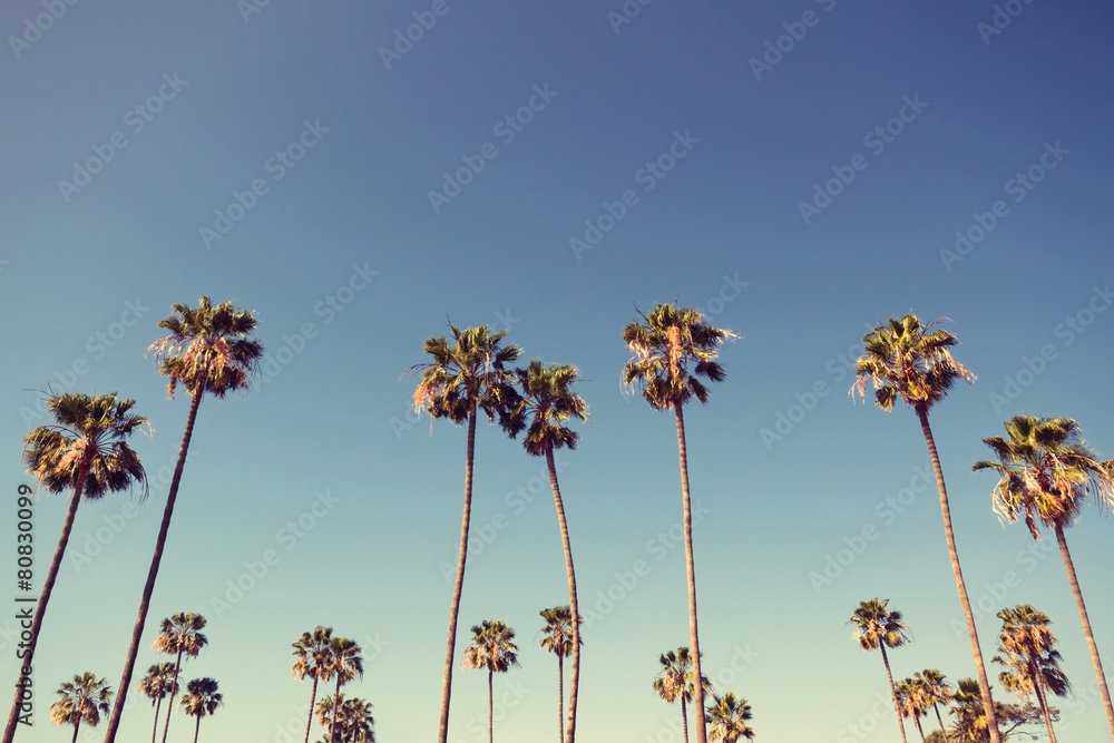 Palm Trees in Retro Style