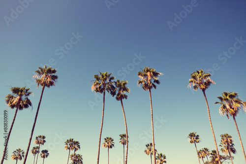 Poster Palmier Palm Trees in Retro Style