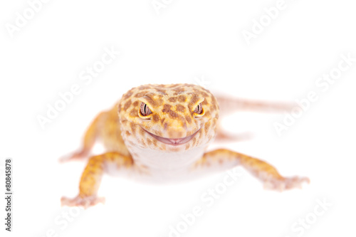 Deurstickers Luipaard Leopard Gecko on a white background