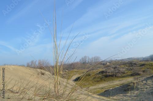 Foto auf AluDibond Nordsee dunes in nature reserve, France