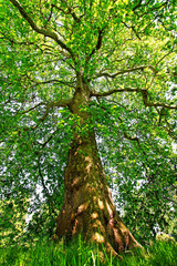 Panel Szklany Drzewa Tree