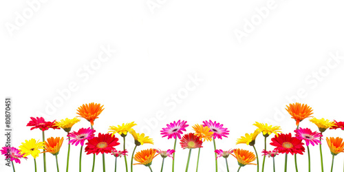 Door stickers Gerbera Blumen Freisteller