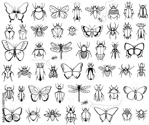 Bugs and butterflies Wallpaper Mural