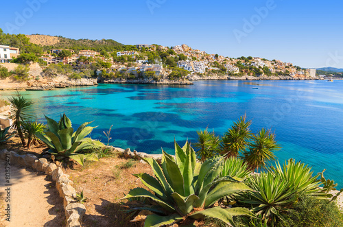 Fotografie, Obraz  Tropical plants in Cala Fornells bay, Majorca island, Spain