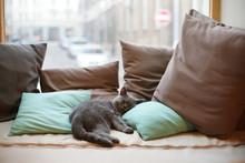 Кот отдыхает на подушках