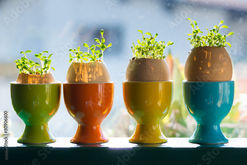 Foto op Plexiglas Cyprus colored ceramic eggcups with egg shells with cress growing out