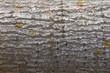Textura o fondo de corteza de tronco de árbol rugoso