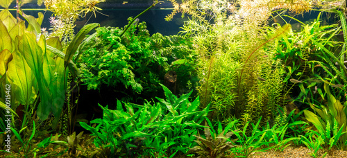 Ttropical freshwater aquarium with fishes #80915462