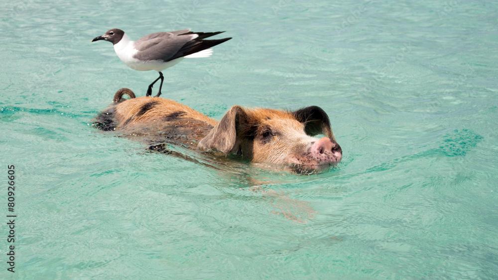 Schwein mit Vogel