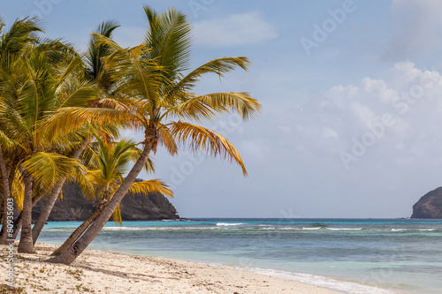 Palm Trees on Beautiful Beach of Tropical Island
