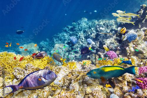 Fototapeta Underwater world with corals and tropical fish. obraz na płótnie