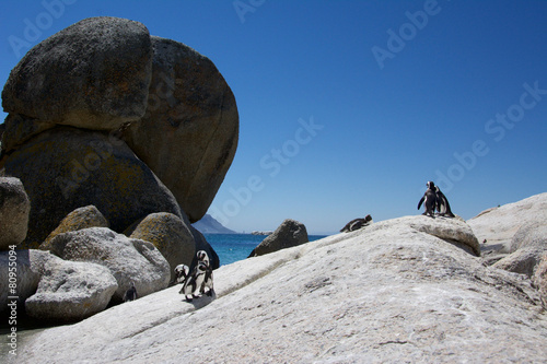 Photo Stands Mountaineering Penguins on Rocks