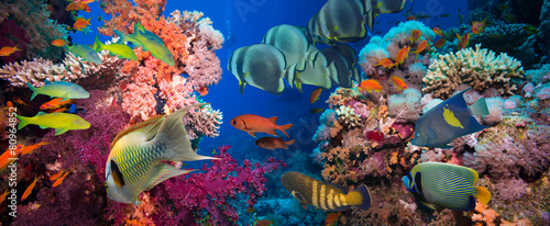 Fotobehang Onder water Tropical Fish and Coral Reef
