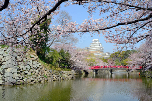 Fotobehang Tokyo Himeji castle in spring