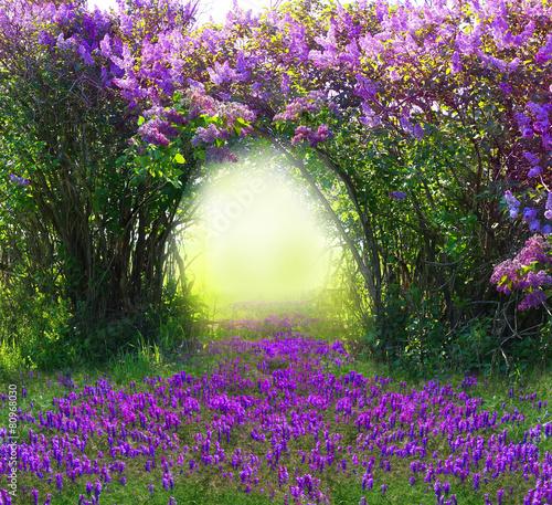magiczny-wiosenny-las