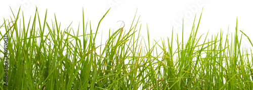 Fotografie, Obraz  herbes sur fond blanc