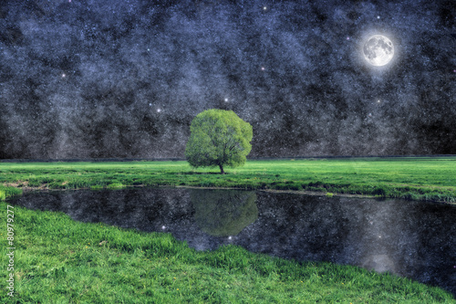 Photo  Tree under the moon