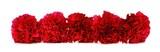 Border arrangement of red carnation flowers