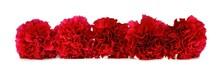 Border Arrangement Of Red Carn...