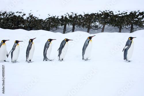 Papiers peints Pingouin ペンギンの行進
