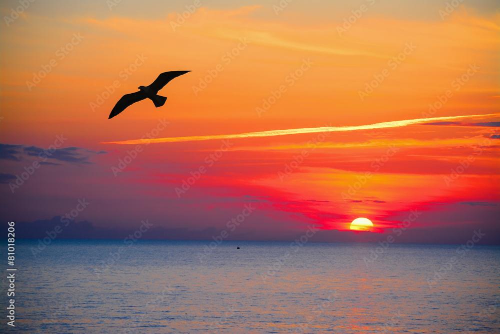 seagull silhouette in an orange sky