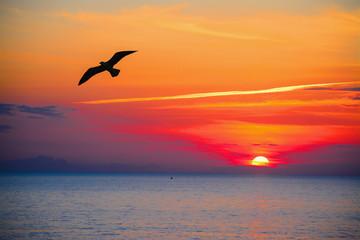 Fototapeta na wymiar seagull silhouette in an orange sky
