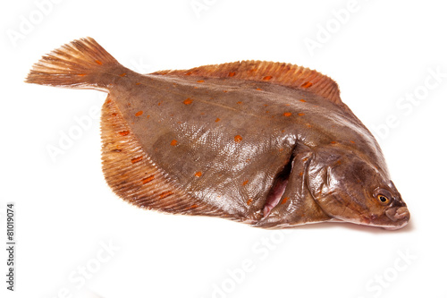 Fotografia Plaice fish isolated on a white studio background.