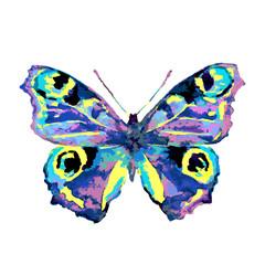 butterfly660