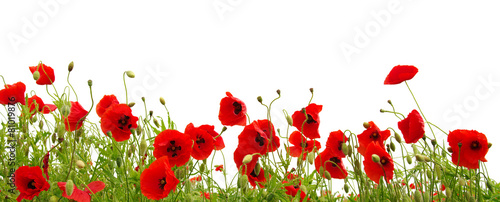 Deurstickers Klaprozen red poppy