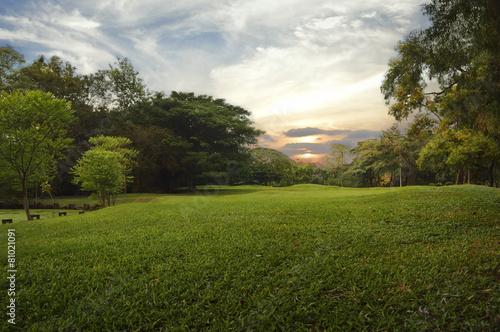 Fotografía  Green grass field in public park,
