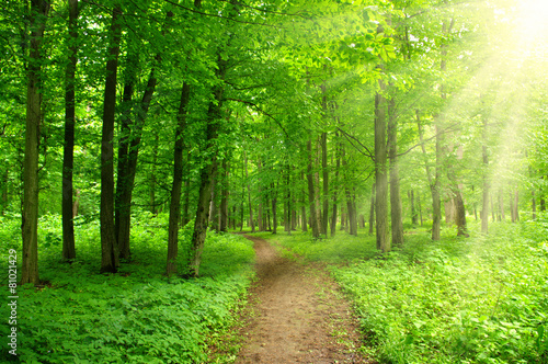Fototapeten Wald sunlight forest