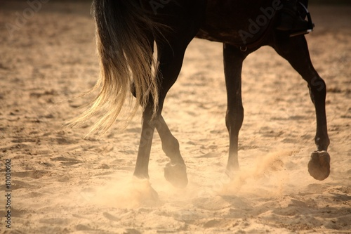 Foto op Canvas Paardrijden Trotting away horse legs close up