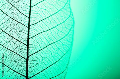 Garden Poster Decorative skeleton leaves Skeleton leaf on green background, close up