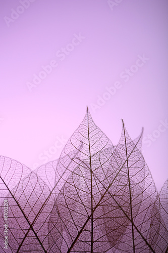Recess Fitting Decorative skeleton leaves Skeleton leaves on purple background, close up