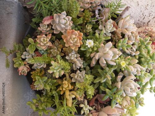 Fotografie, Obraz  多肉植物の寄せ植え鉢
