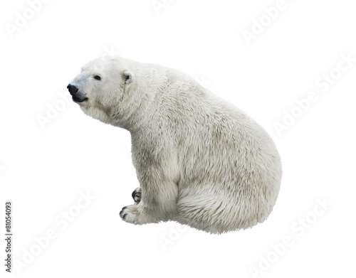In de dag Ijsbeer Polar bear sitting, isolated on a white background