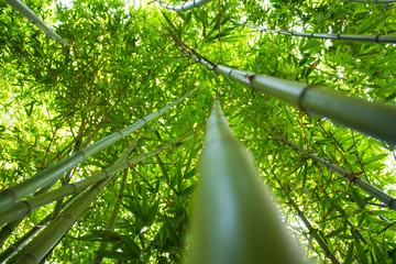 Fototapeta Do restauracji Las bambusowy