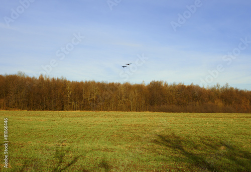 Foto op Aluminium Blauw Two crows fly over the forest and field