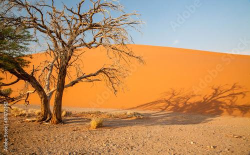 Desert landscape - 81072462