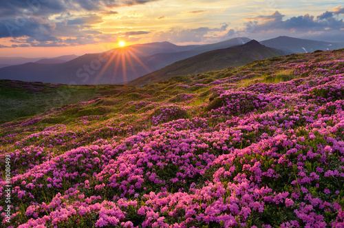 Foto op Aluminium Aubergine Fields of flowers in the mountains