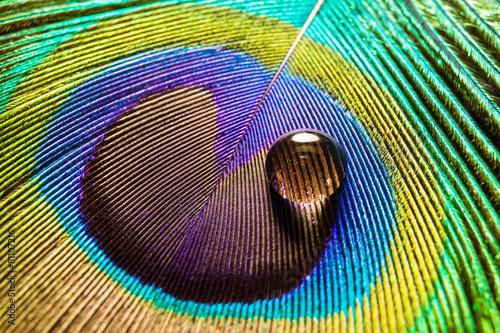 Fotografie, Obraz  Nahaufnahme eines Wassertropfens auf einer Pfauenfeder