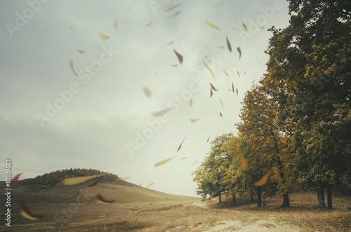 Fotografie, Obraz  edge of forest with leaves blown by wind
